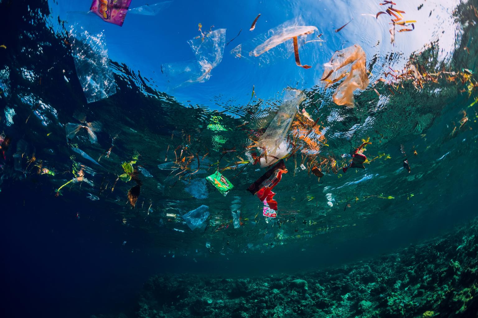 pollution plastique des océans